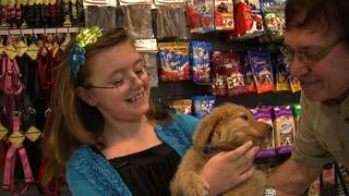 Pet_Store_New_Dog_20120416205029_JPG