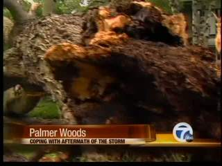 Palmer woods hit by storms