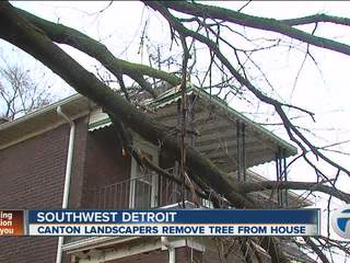 Canton landscapers remove tree from house