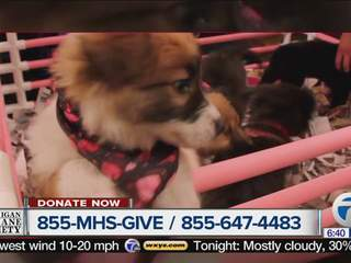 Michigan Humane Society telethon
