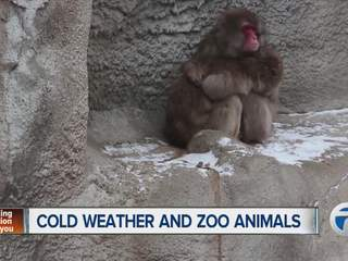 Cold weather and Zoo animals