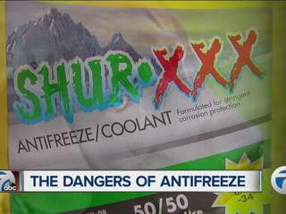 Dangers of anti-freeze