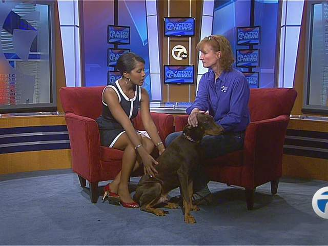 Michigan Humane Society offers tips to help keep dogs, cats and pets…