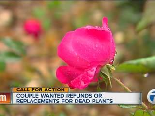 Memorial garden needed plants replaced