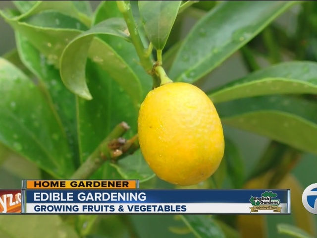 Home Gardener, growing fruits and vegetables