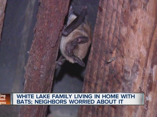 Bats invade house in White Lake Township