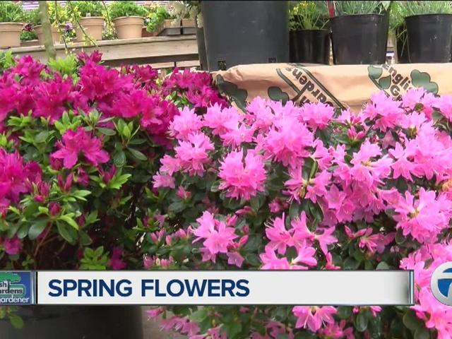 Home Gardener, spring flowers