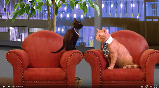 Humane Society's 'Cat Tank' video is hilarious