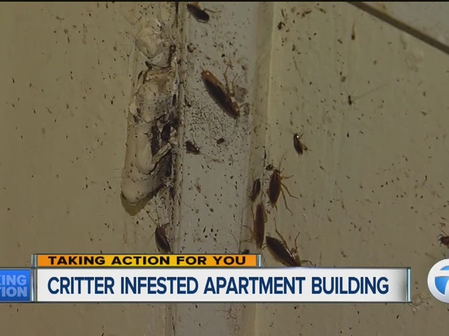 Apartment Building Has Roaches bug infested apartment building makes life a living hell for