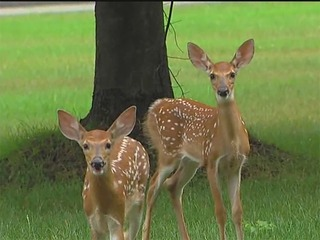 10 parks removed from Ann Arbor deer cull