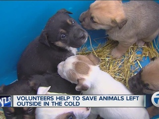 Volunteers work to keep dogs alive in the cold