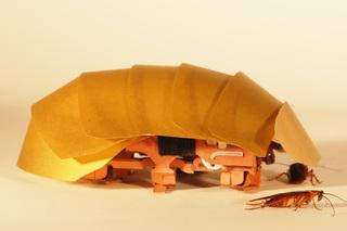 Scientists build cockroach robot prototype