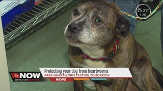 Rescue group warns dog owners of deadly disease