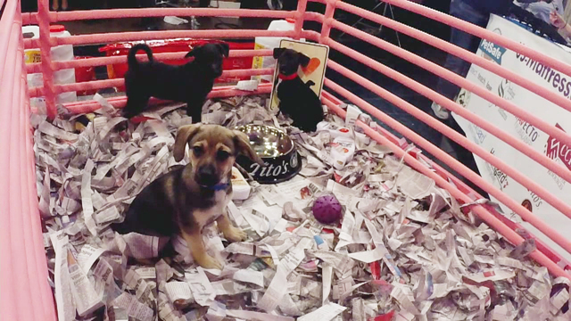 PUPPY CAM: Watch puppies from the MHS telethon