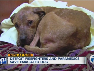 Emaciated dog finds heroes in Detroit firehouse