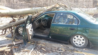 Man not hurt when tree crashes down on car