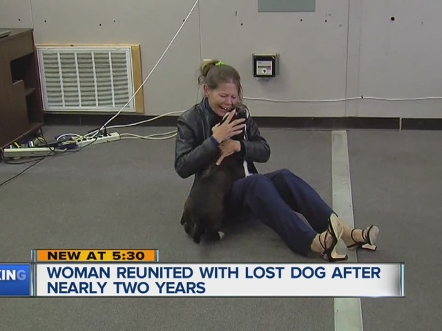 Health Lottery Odds >> Dog reunited with owner thanks to microchip nearly two ...