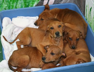 5 puppies found abandoned on Monroe Co. road