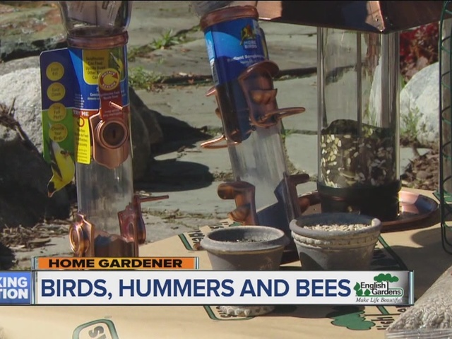 Home Gardener: Birds, hummers and bees