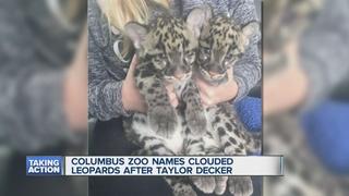 Lions' Decker no stranger to big cats