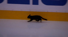 Sharks name stray cat after team captain