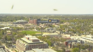 VIDEO: Ants take over Ann Arbor tower cam