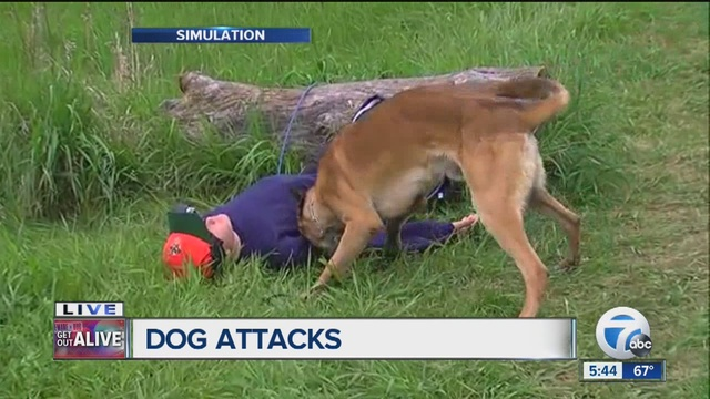 Get out alive what you need to so to survive a dog attack for What a dog needs
