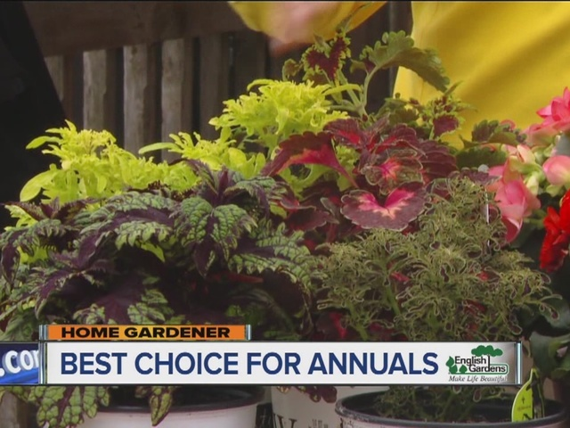 Home Gardener: Best choice for annuals