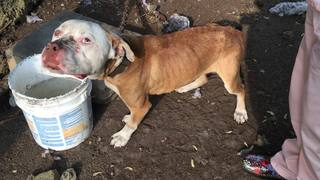 Dog rescued after being left chained in yard