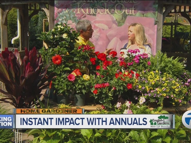 Home Gardener: Instant Impact with Annuals