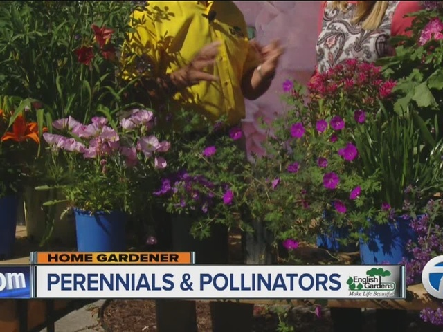 Home Gardener: Perennials and Pollinators