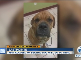 Man set to stand trial on felony animal torture