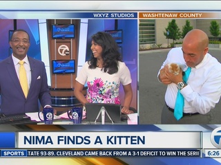 What happened to kitten that crashed live shot?