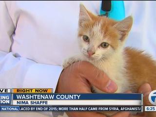 VIDEO: Kitten crashes MI reporter's live shot