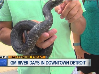 Snake clings to Kim Russell at GM River Days