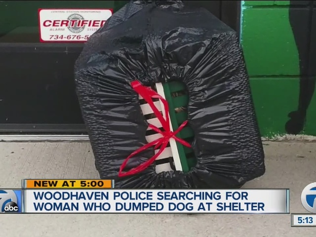 Dog found abandoned in garbage bag outside Woodhaven shelter