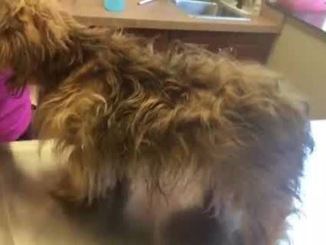 Dog found in plastic bag outside animal shelter in Woodhaven