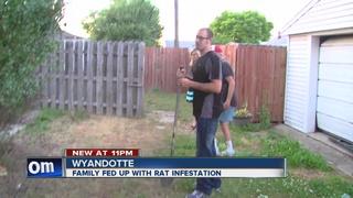 Man says rats ruining his suburban neighborhood