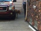 Dog returns home injured after being stolen