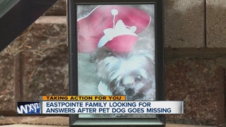 Boy pleads for return of his dog, Bunny
