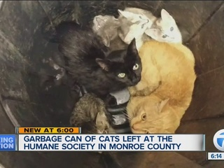 Trash can with kittens & cats dumped at shelter