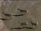 Bear steals Michigan hunter's 6-point buck