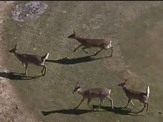 Oakland Co. leads SE Michigan in deer crashes
