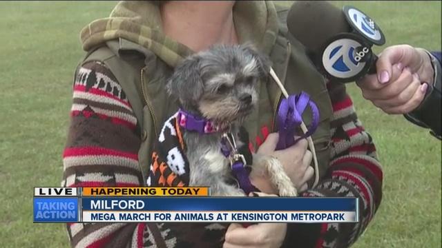 Humane Society Of Missouri Heads To Georgia For Hurricane Evacuations