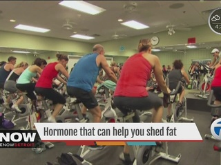 Exercise hormone helps shed fat
