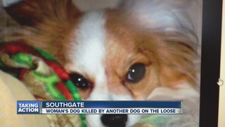 Woman attacked, dog killed by loose dog