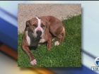 City blames computer error for dog's death