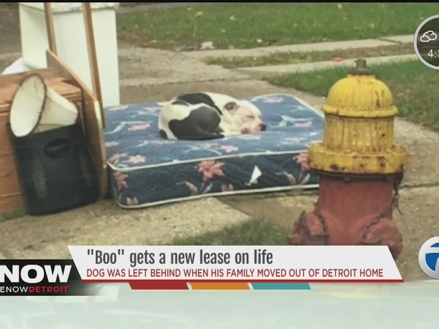 Dog waits for owners to return for an entire month