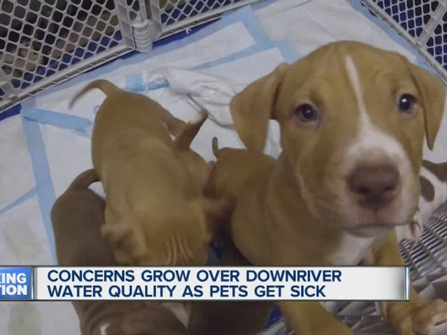 Downriver water quality concerns grow as pets reported sick