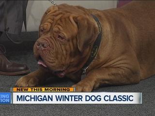 Last day for Michigan Winter Dog Classic